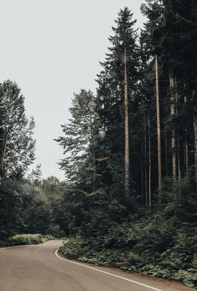 route près de grands arbres photo