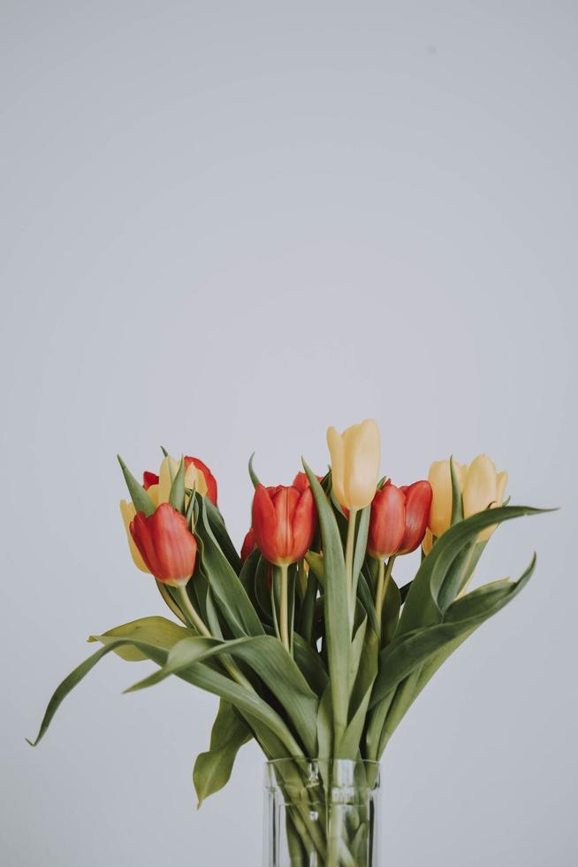 bouquet de tulipes jaunes et rouges photo