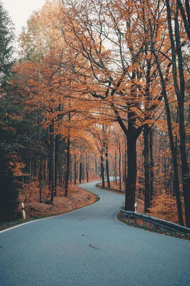 arbres bruns sur route en béton gris photo