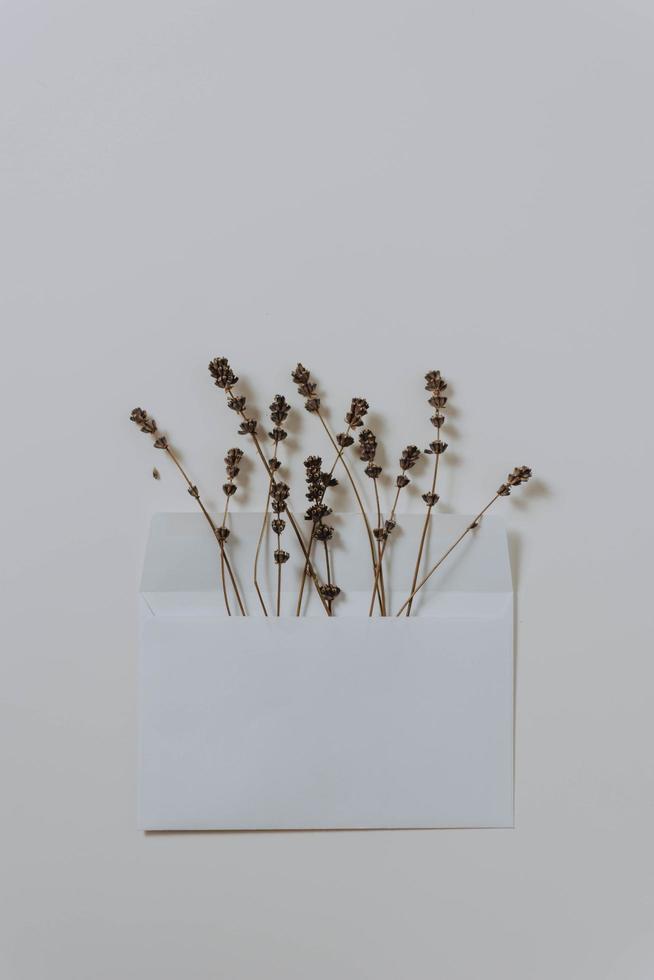 fleurs séchées dans une enveloppe photo