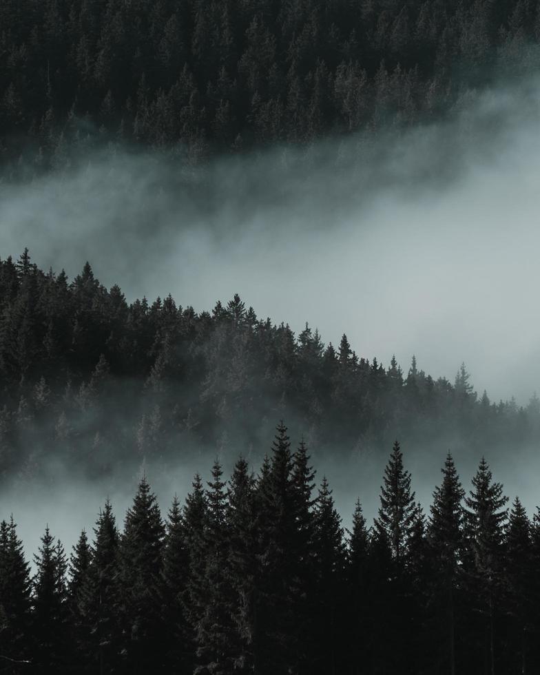 vue aérienne des pins photo