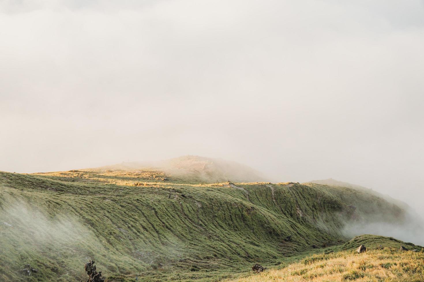 champ vert vallonné photo