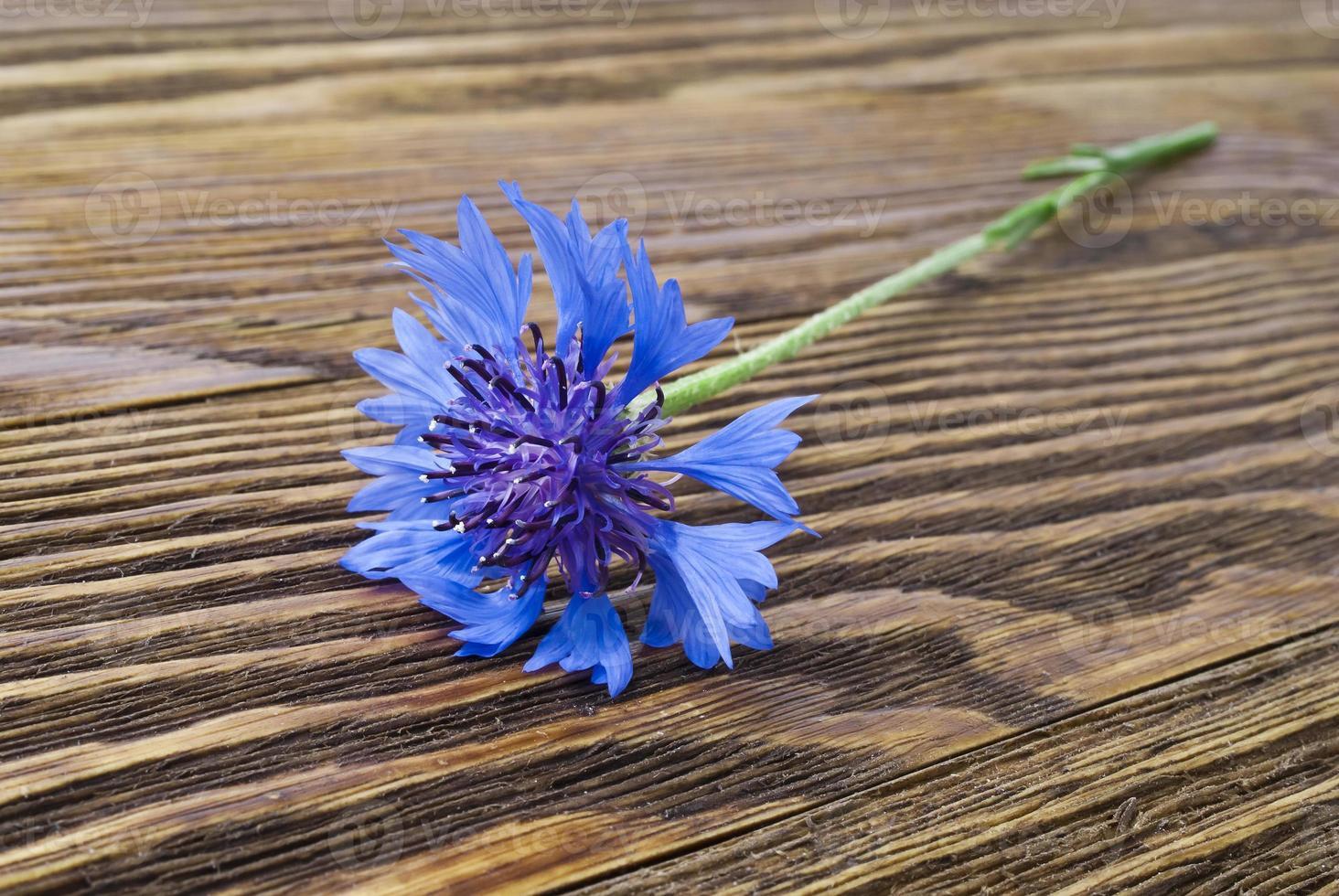bleuet sur la surface en bois photo