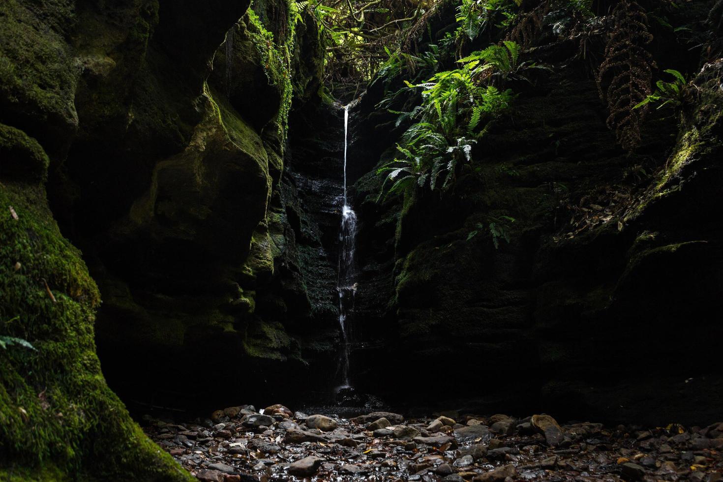 petite cascade entourée de mousse verte photo