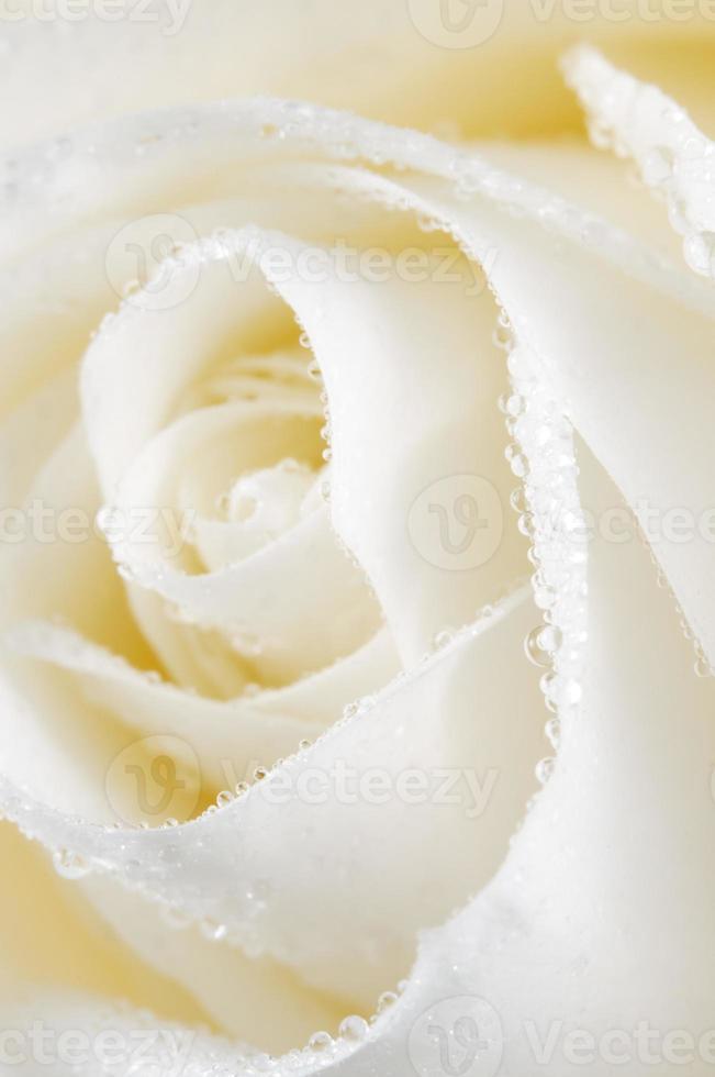 Macro de fragment de fleur rose photo