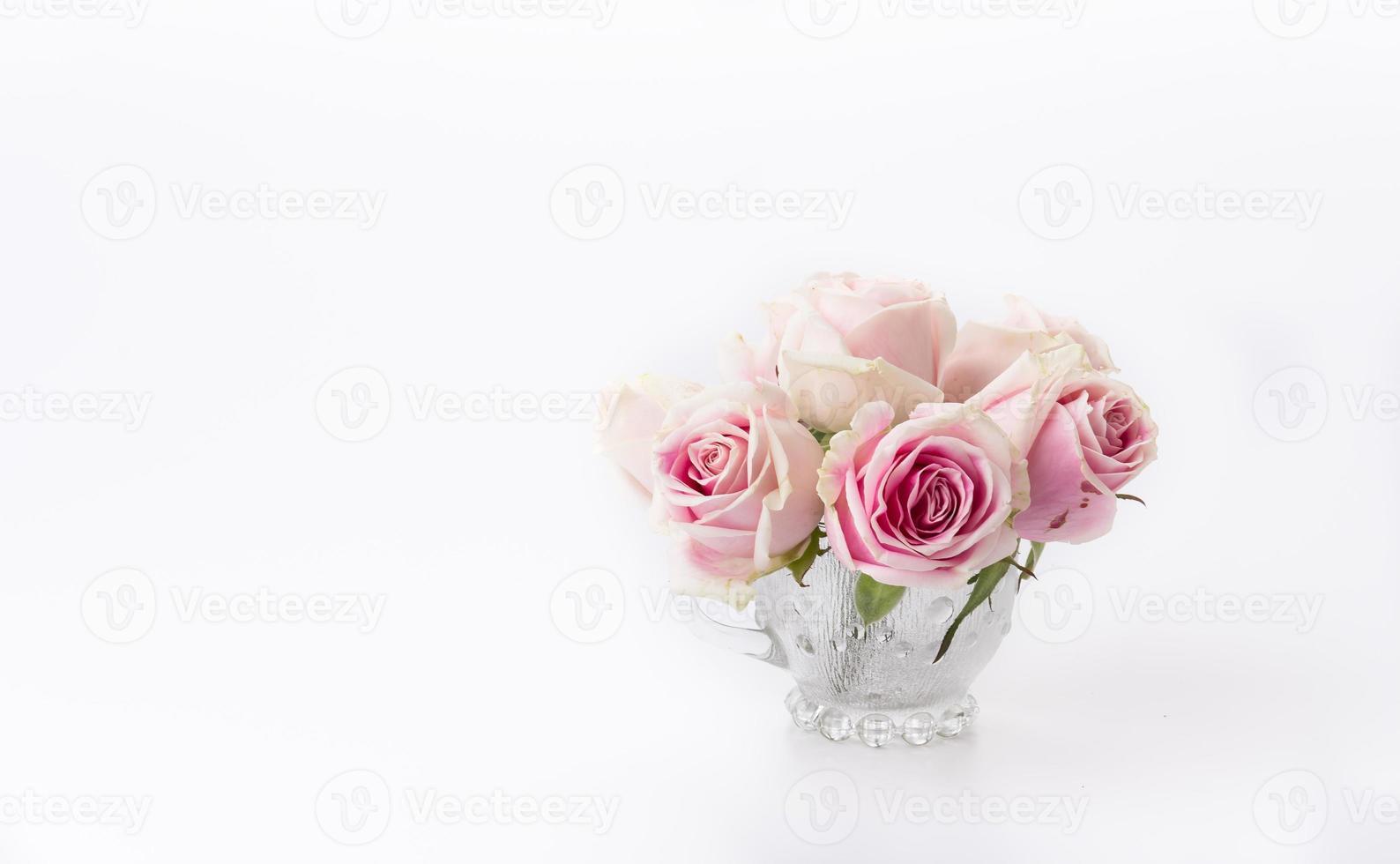 rose blanche et rose photo