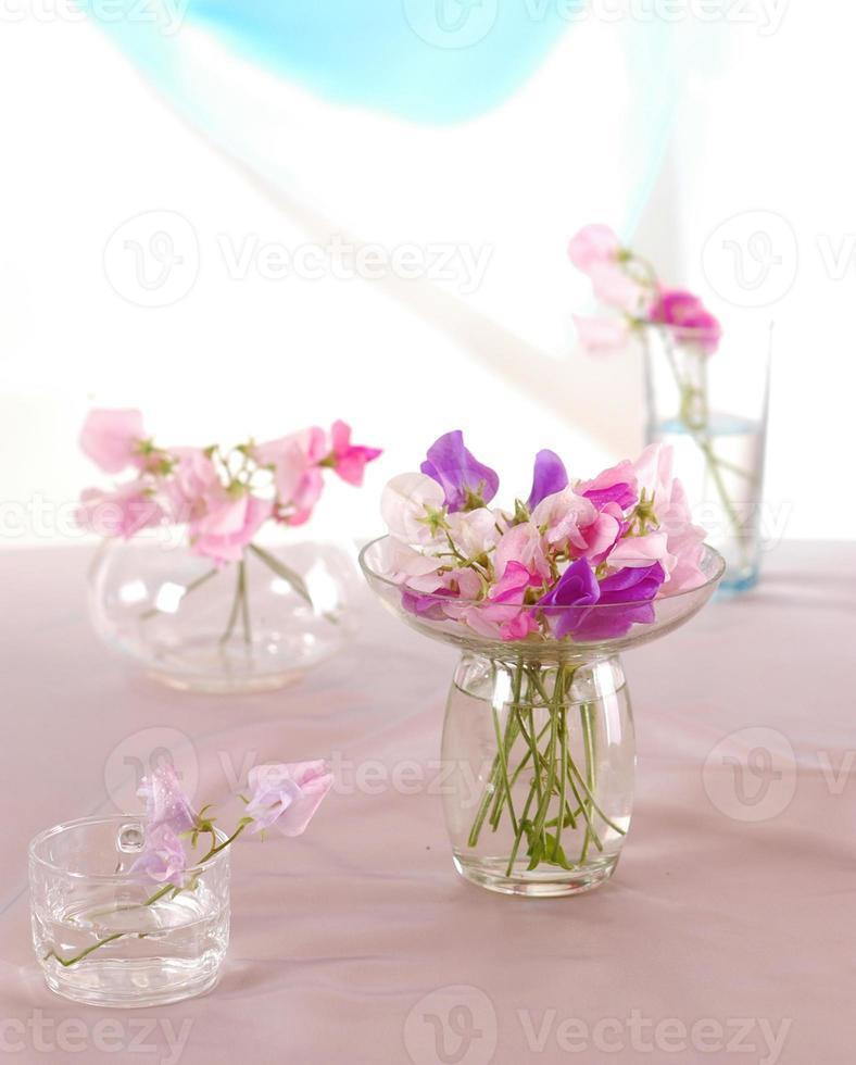 fleur de pois de senteur photo