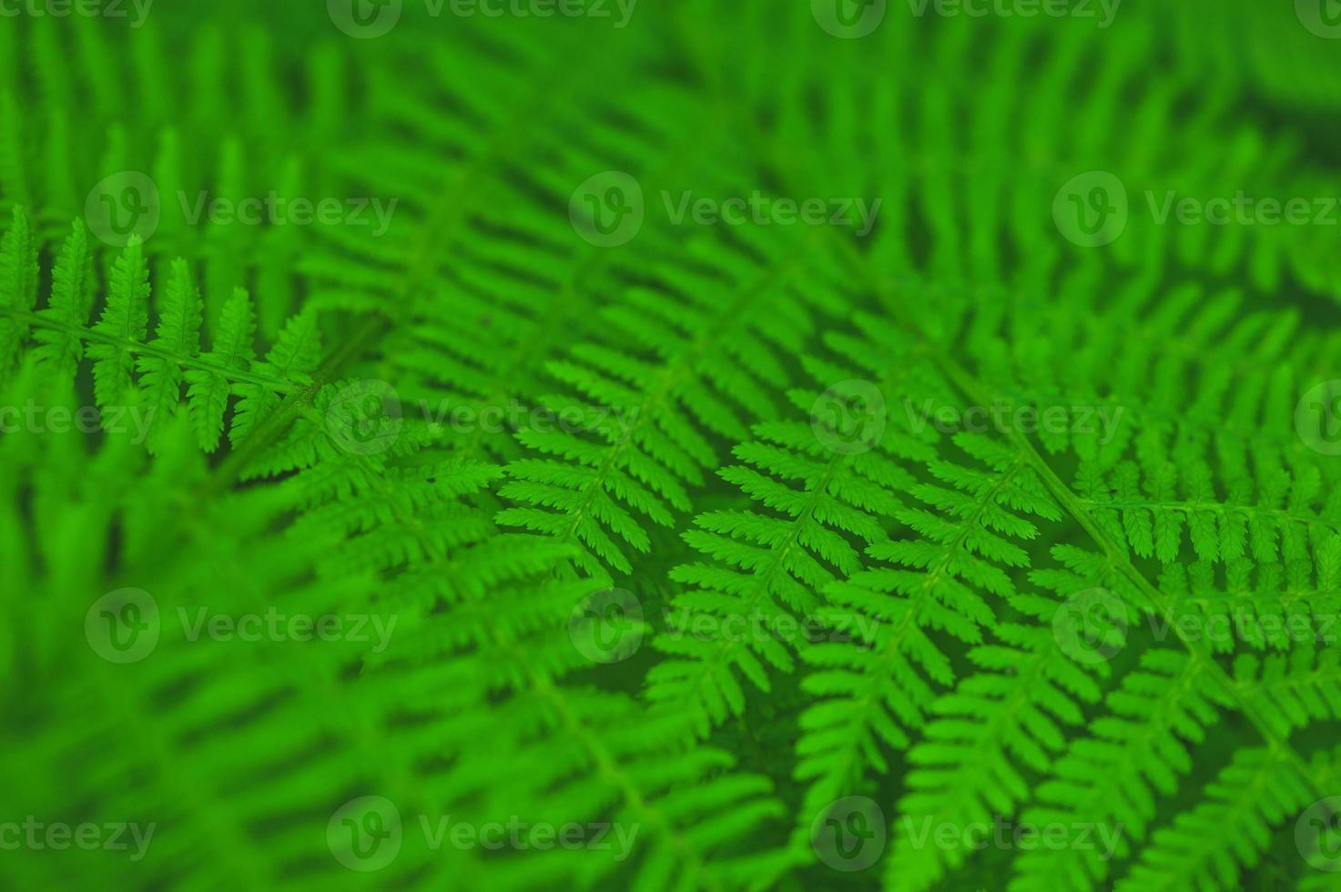 fond de feuilles de fougère photo