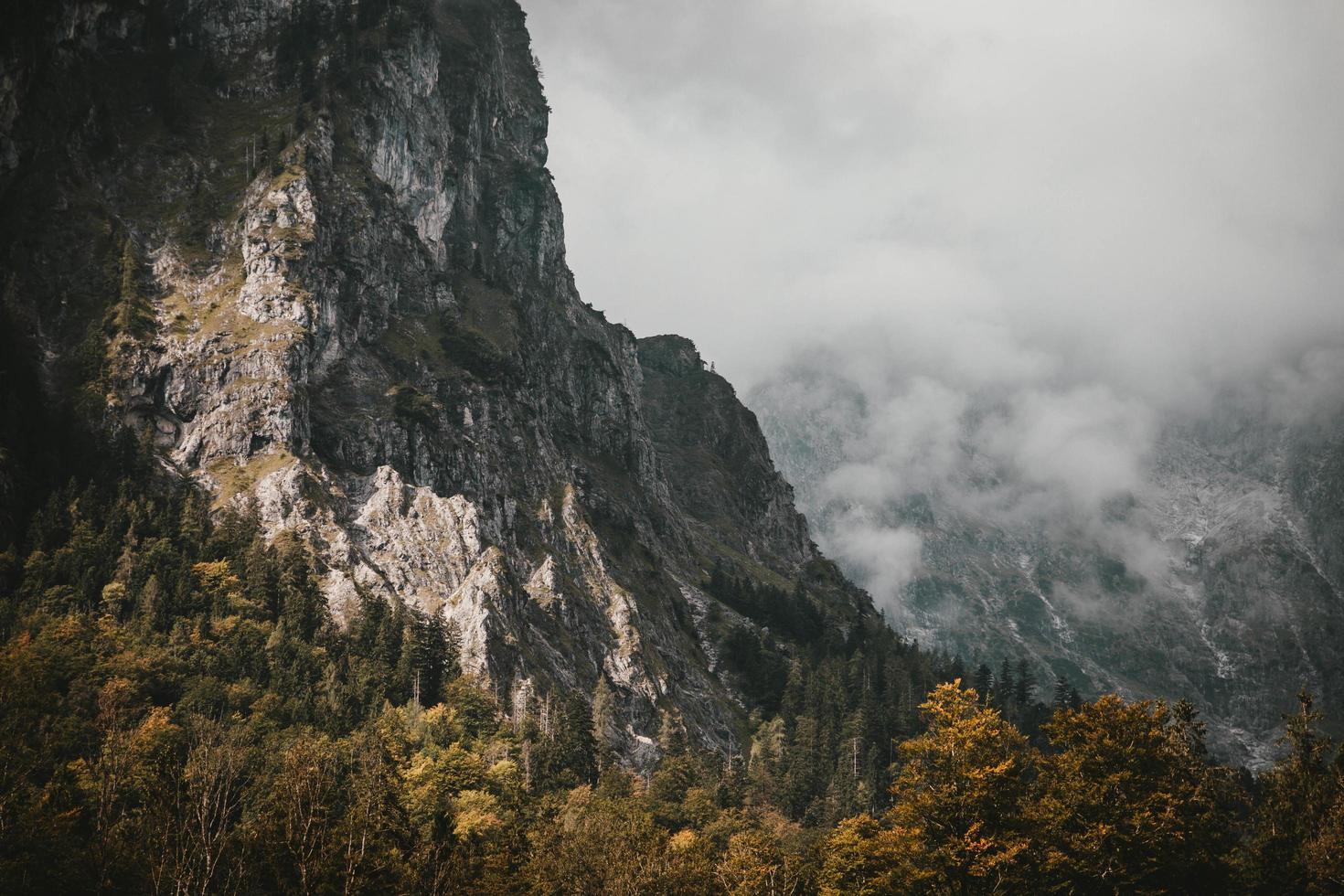 montagnes et arbres maussades photo
