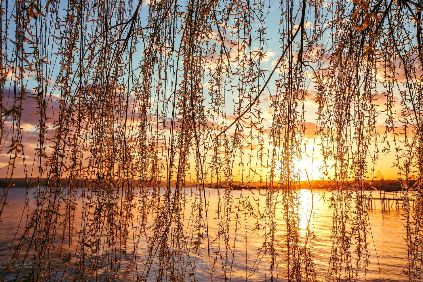 osier au bord de la rivière et beau coucher de soleil photo