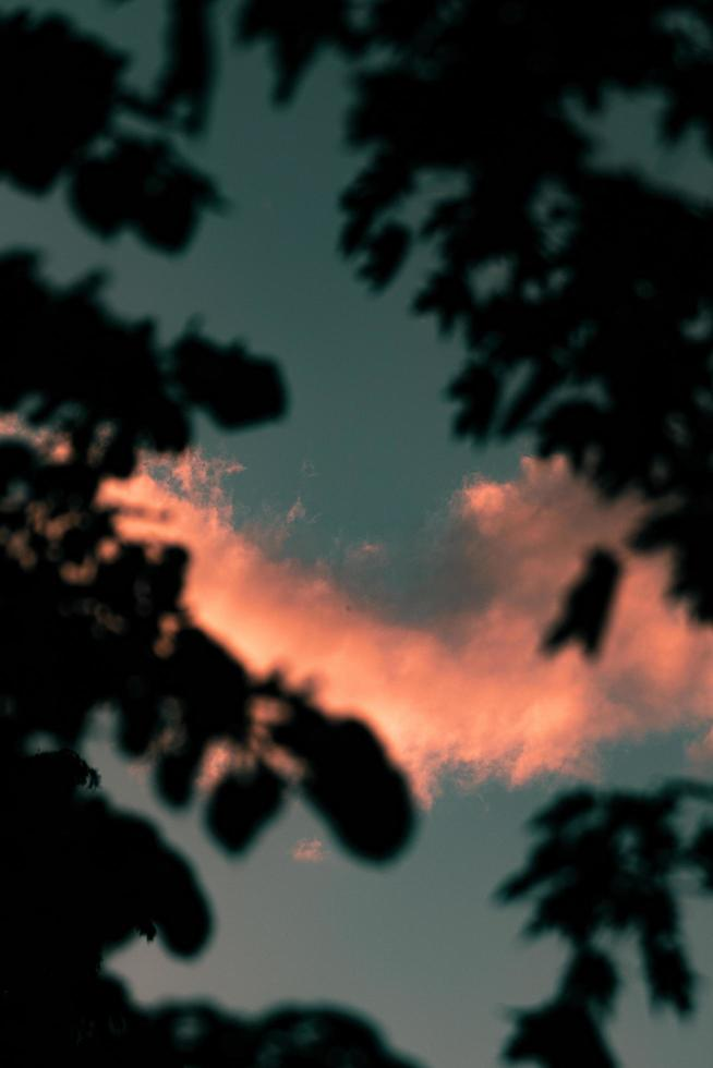 silhouette d'arbres au coucher du soleil photo
