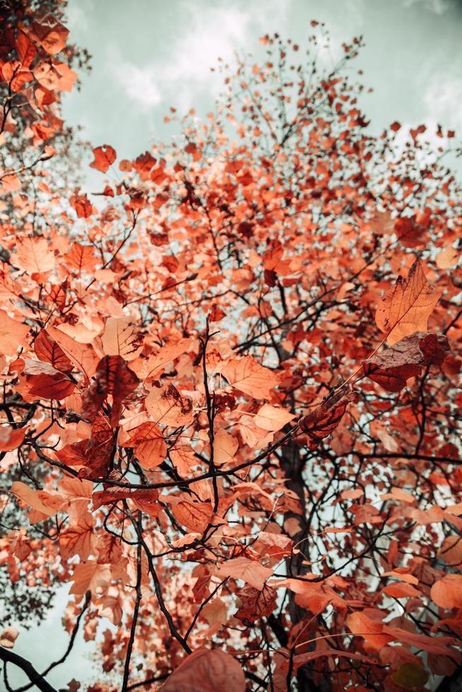 photo à faible angle de feuilles brunes