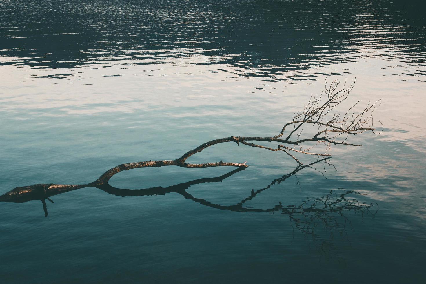 Branche d'arbre nu sur plan d'eau photo