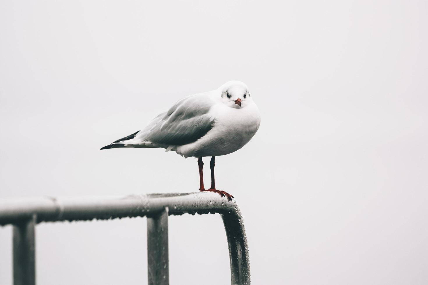 mouette blanche sur balustrade en métal photo