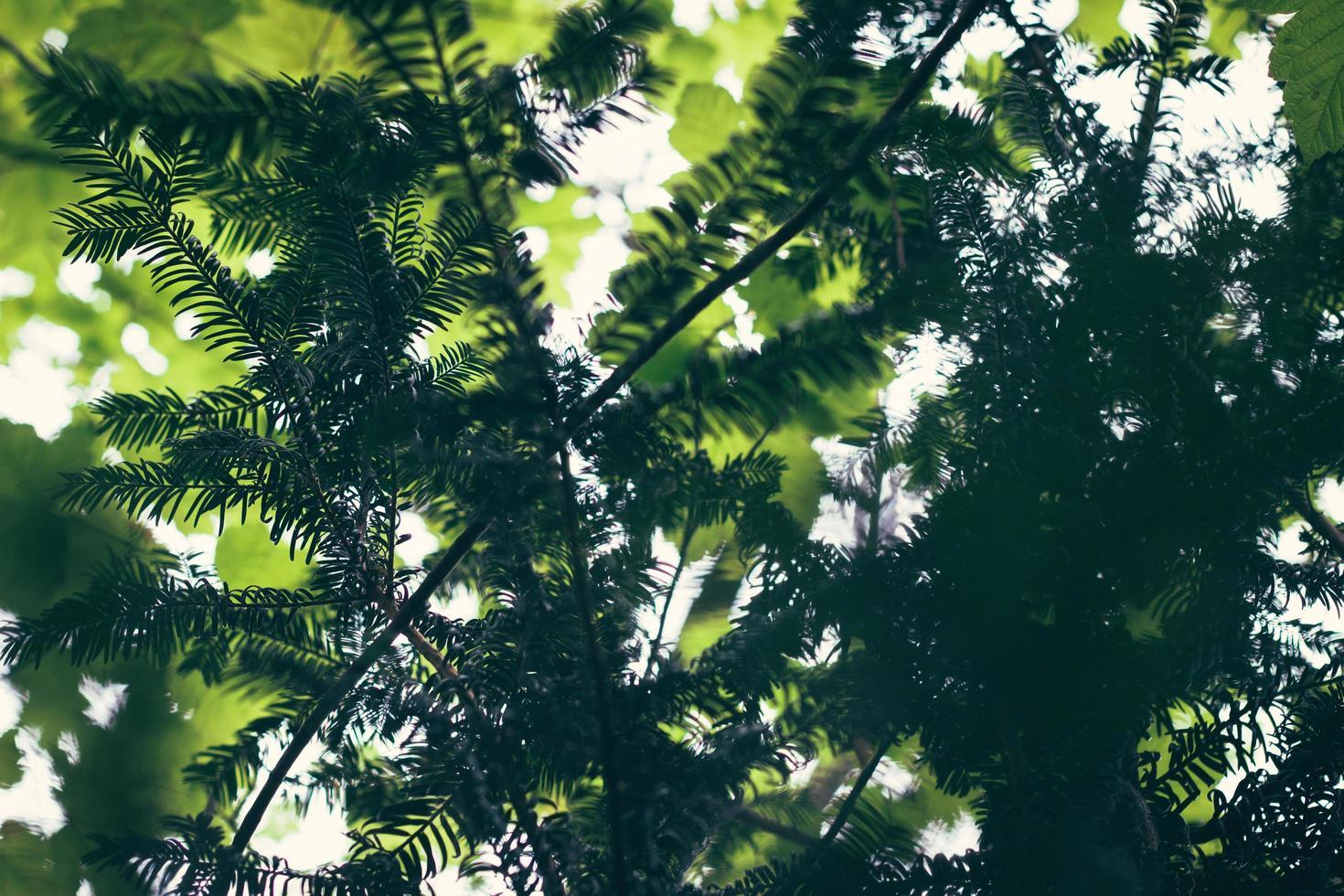 mise au point sélective gros plan d'arbre photo