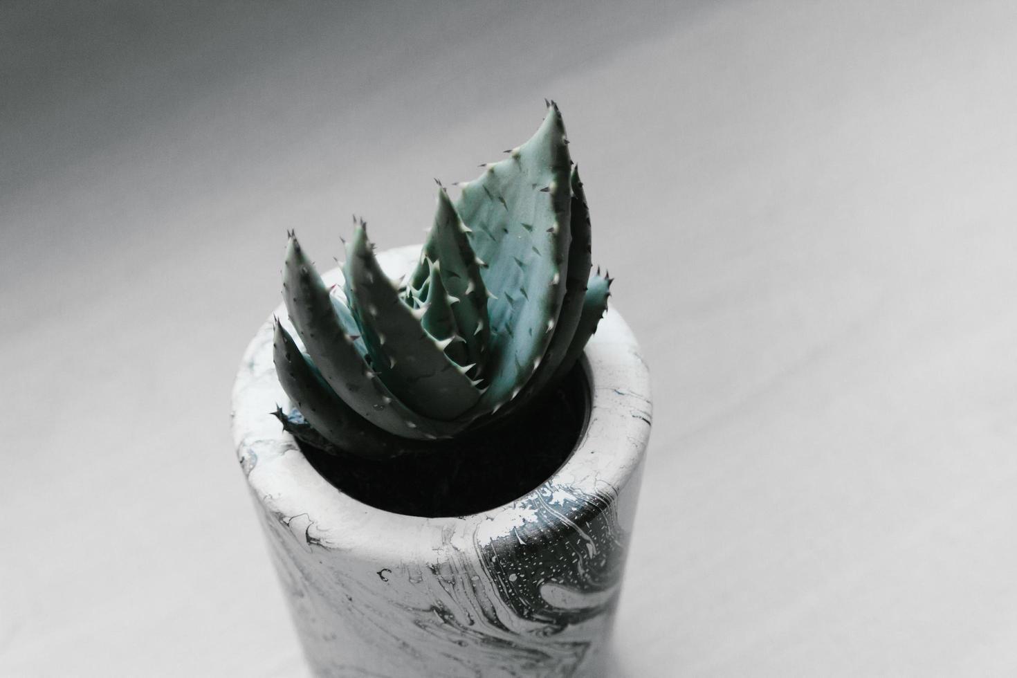 succulente verte en pot photo