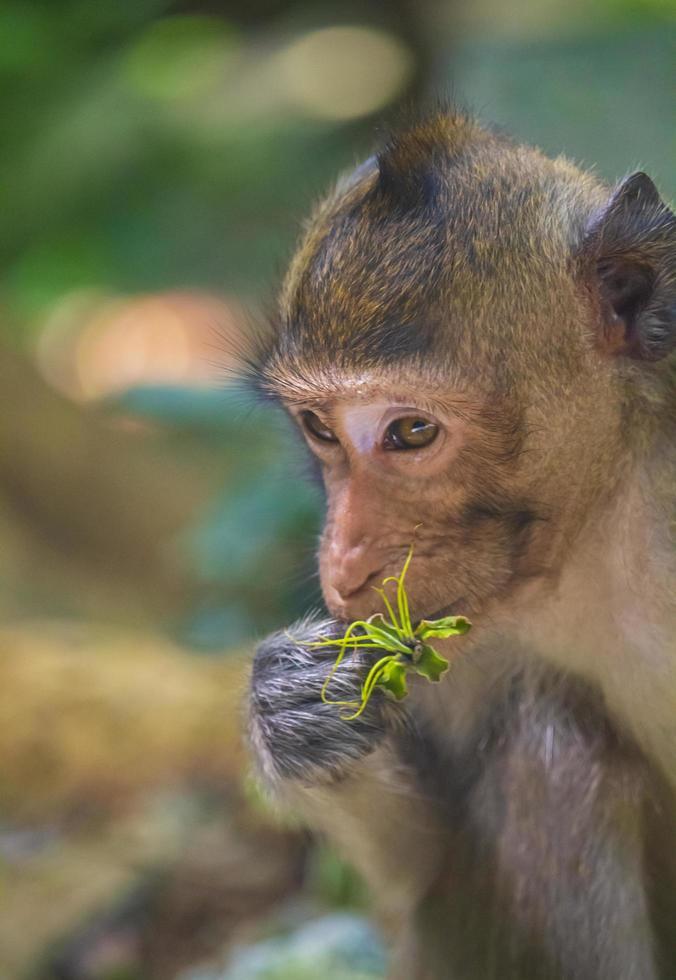plante de maintien de singe photo