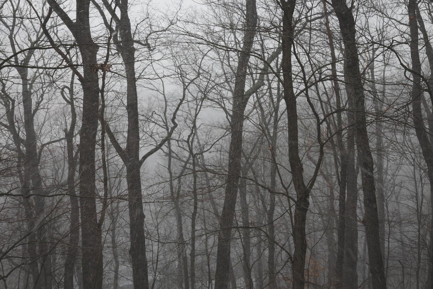 forêt brumeuse en hiver photo