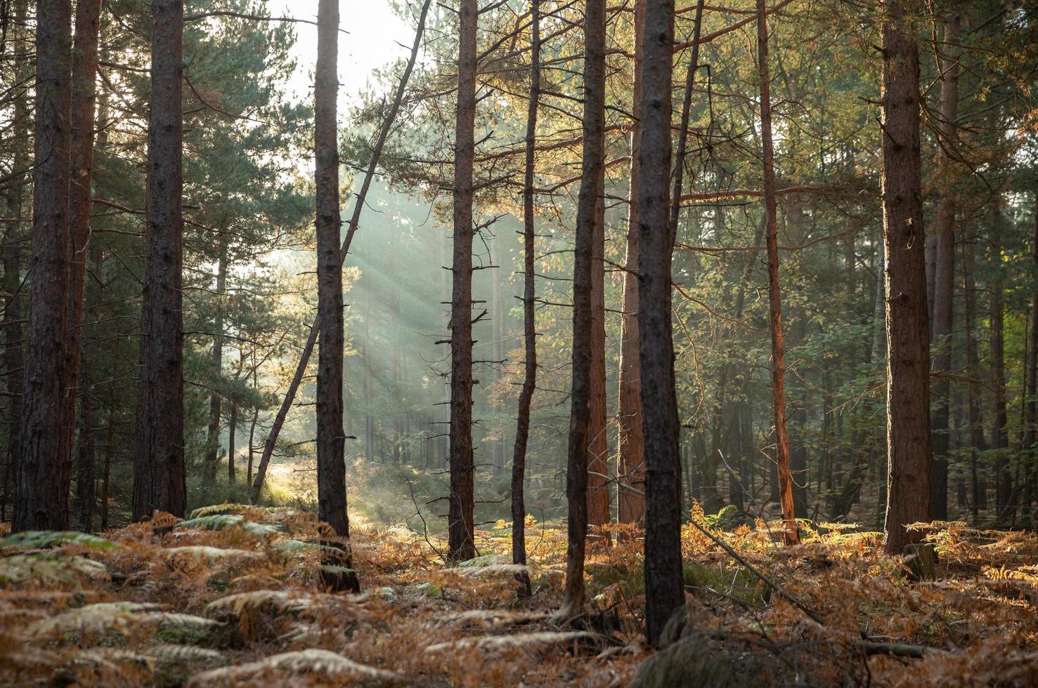 soleil à travers les arbres photo