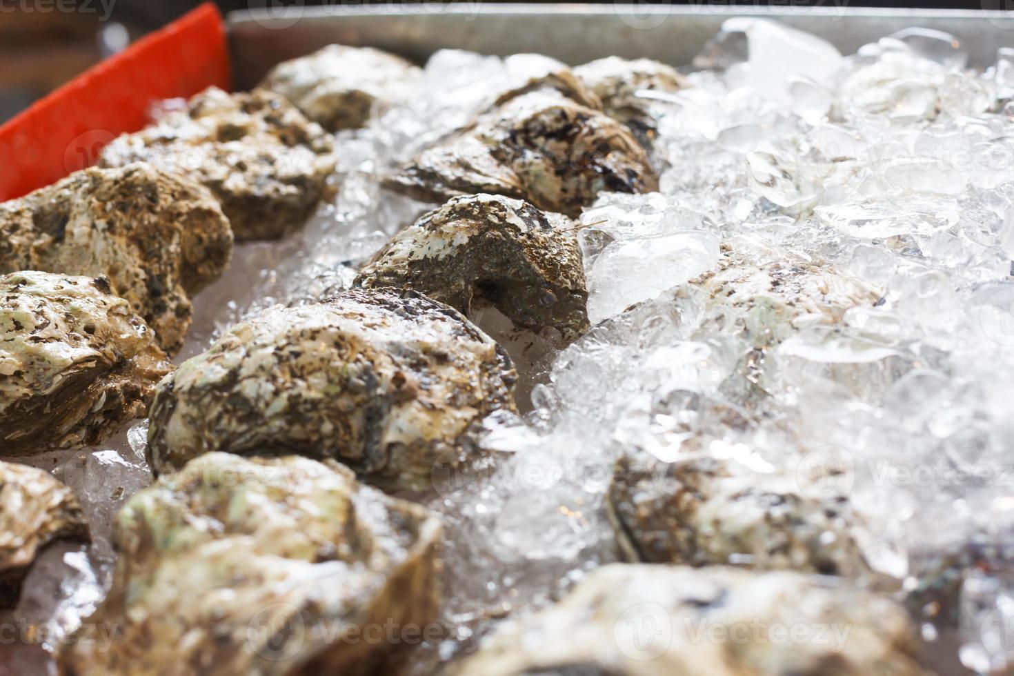 huîtres sur glace photo