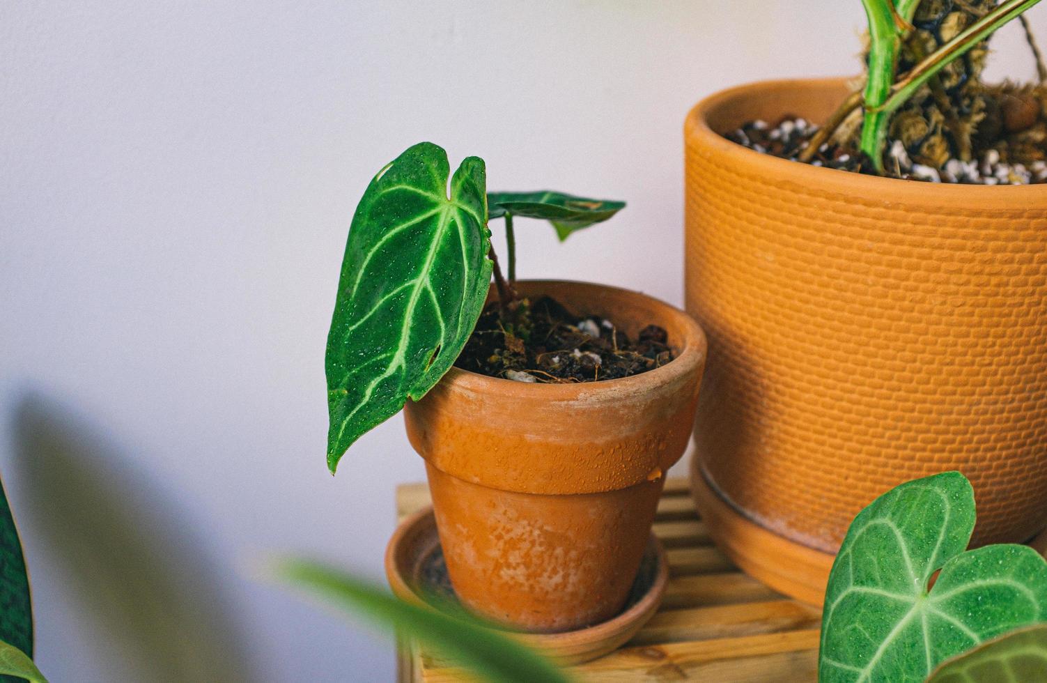 gros plan, de, plantes pot photo