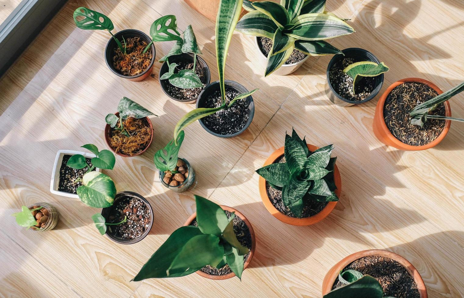 vue de dessus des plantes en pot photo