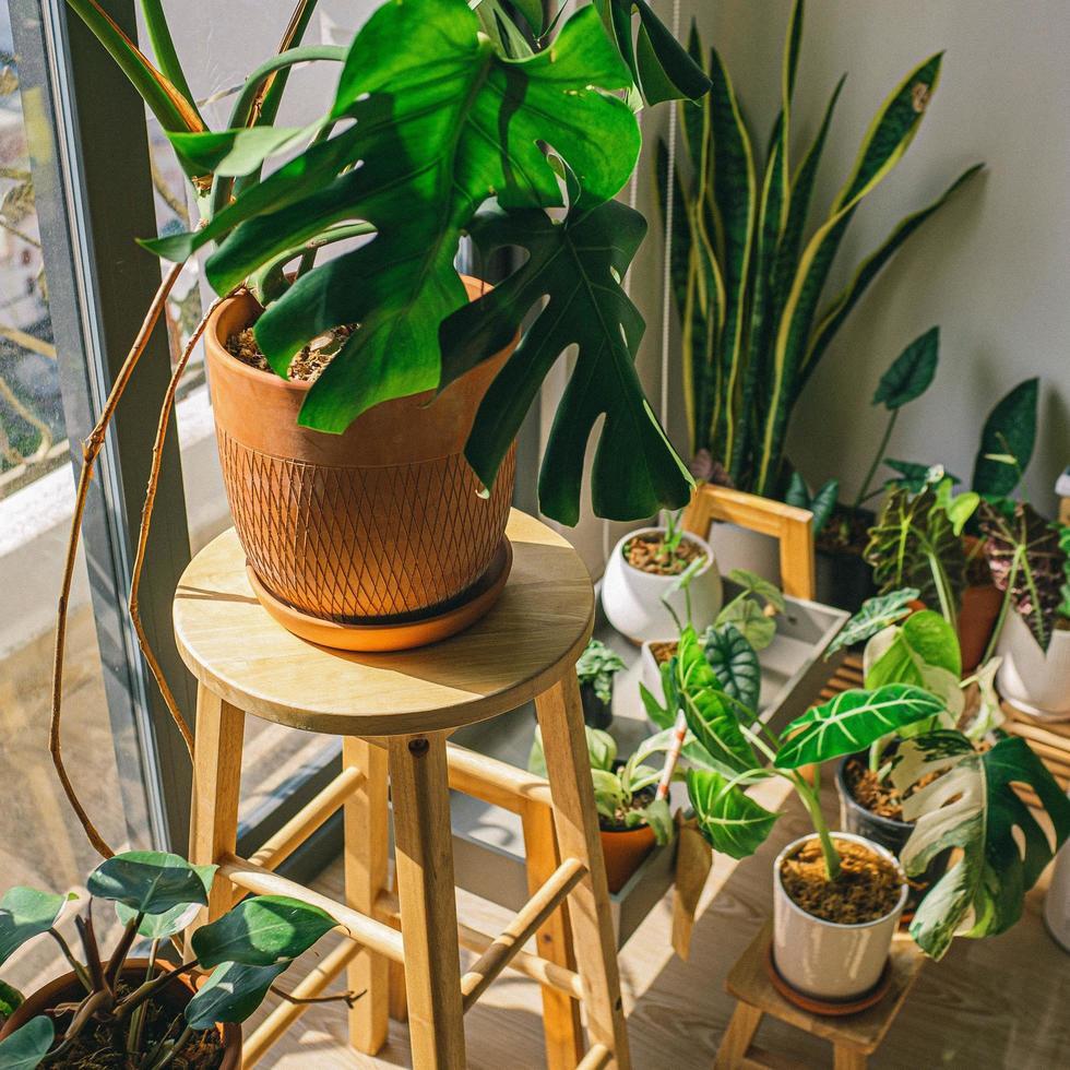 plantes d'intérieur près d'une fenêtre photo
