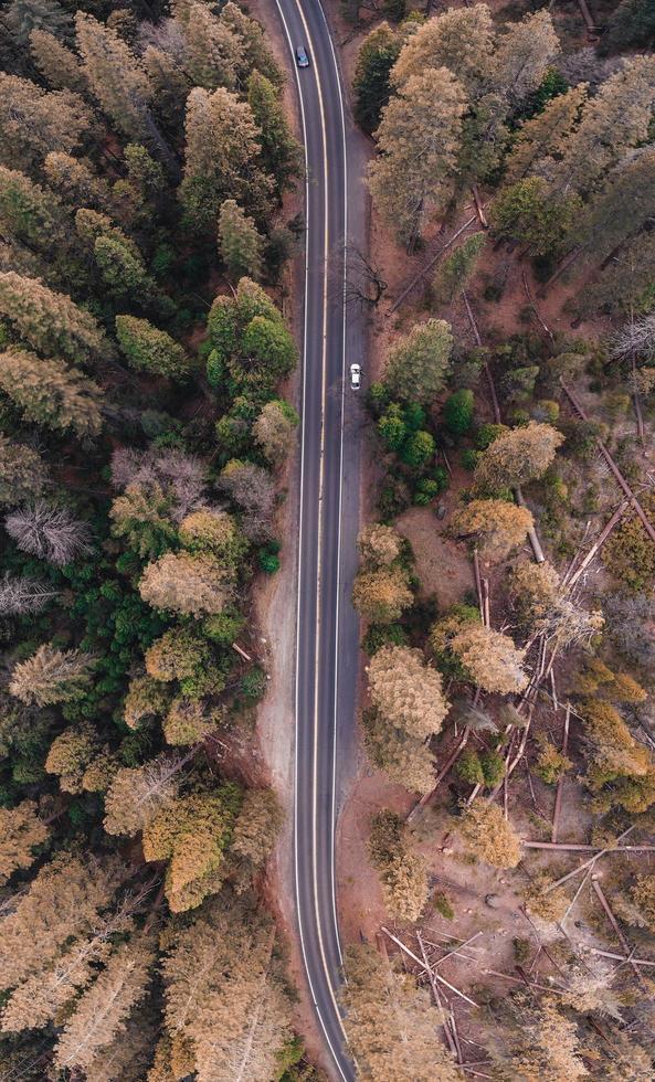 vue à vol d'oiseau d'une route dans la forêt photo