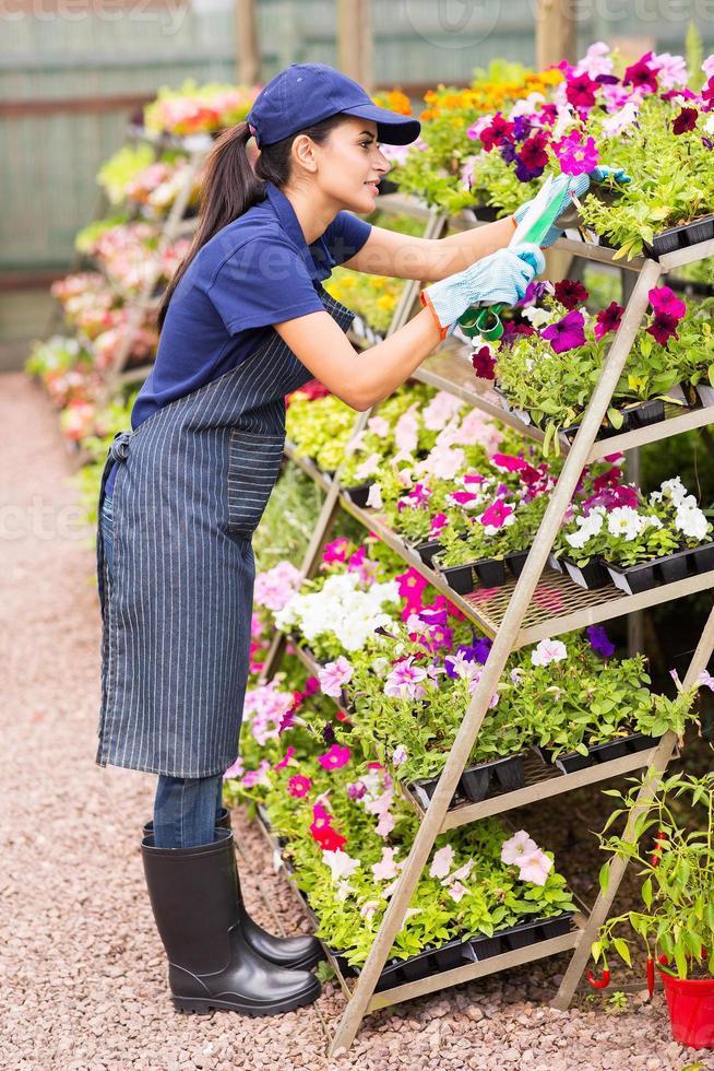ouvrier de la pépinière coupe des fleurs photo