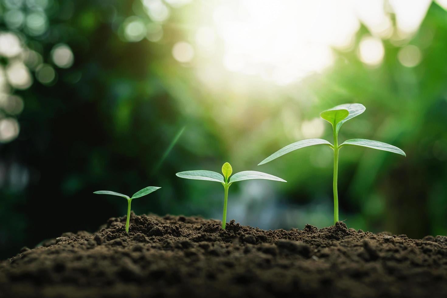 croissance des plantes sur le sol photo