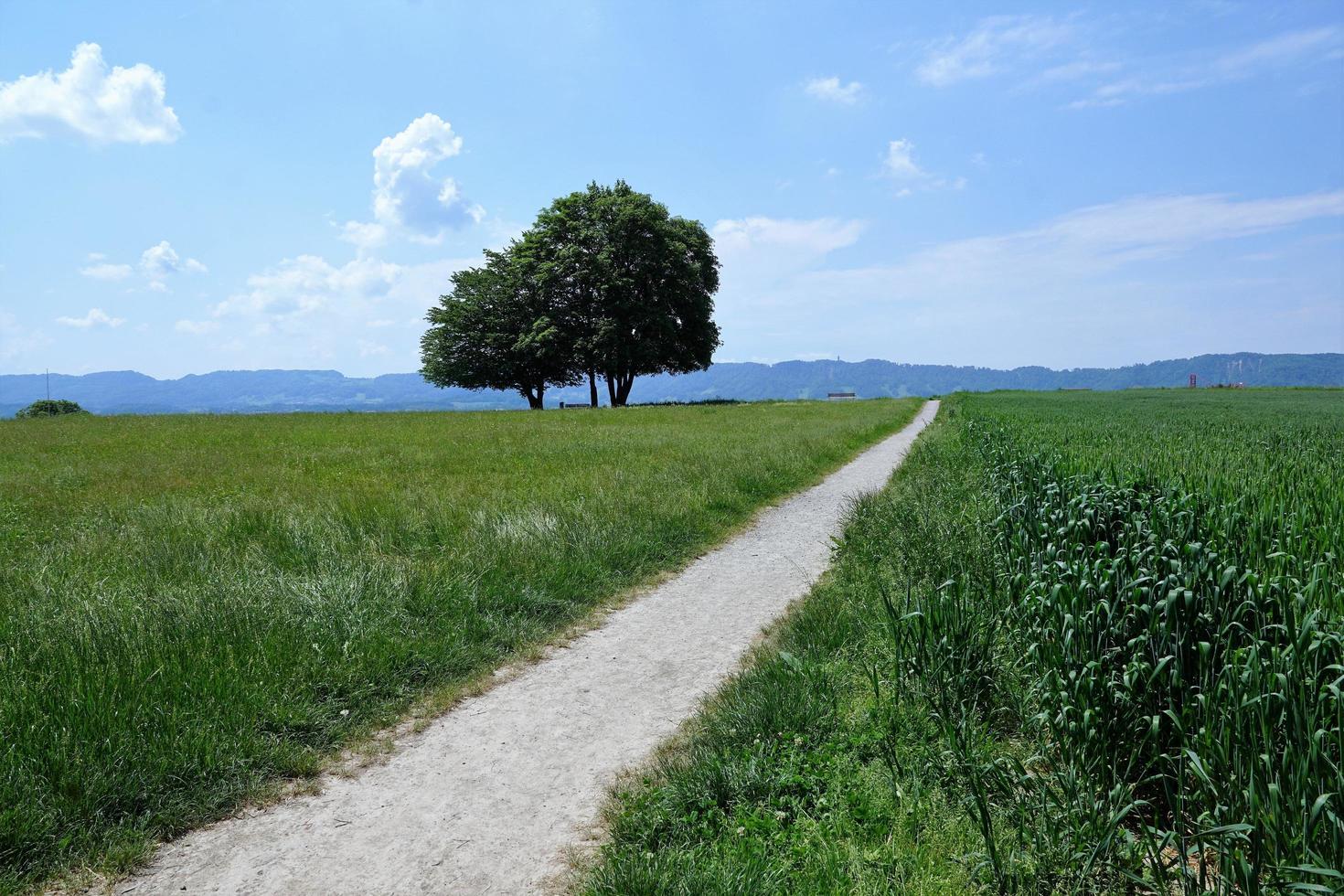 champ vert à zollikon photo