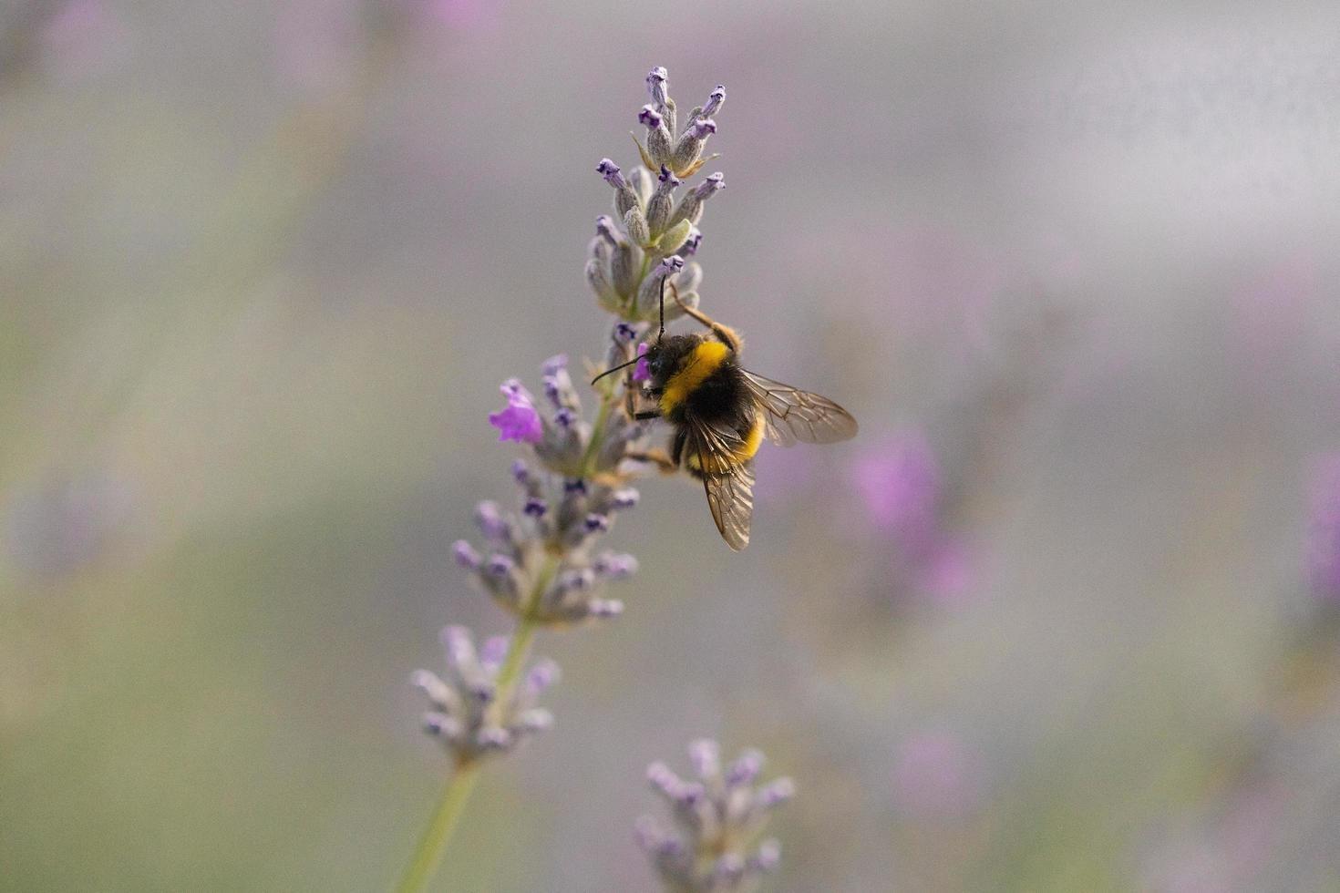 vue rapprochée d'une abeille photo