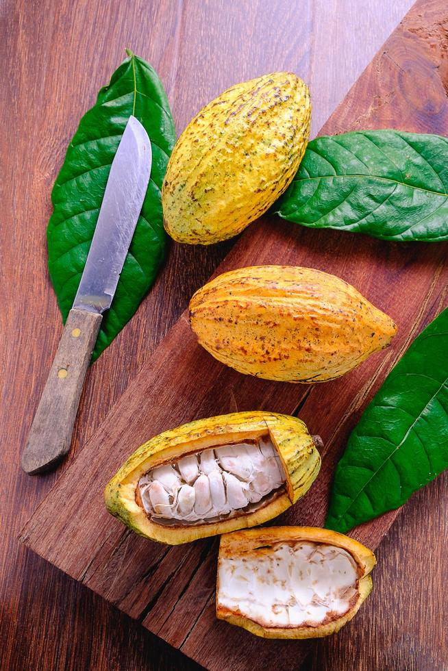 fruit de cacao frais photo