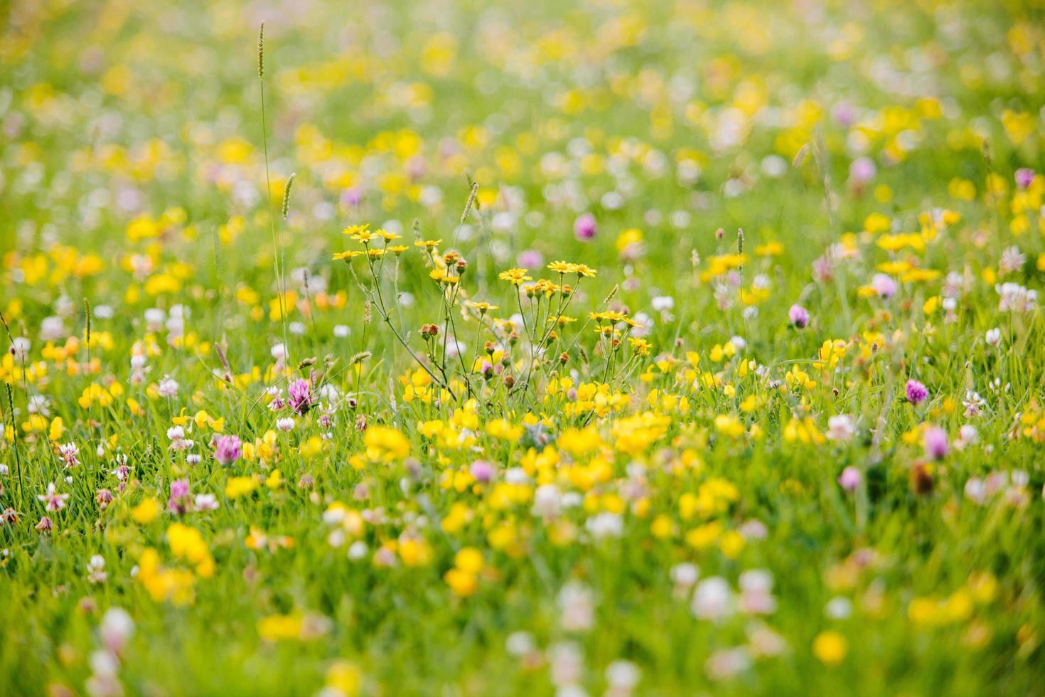 champ de fleurs jaunes pendant la journée photo