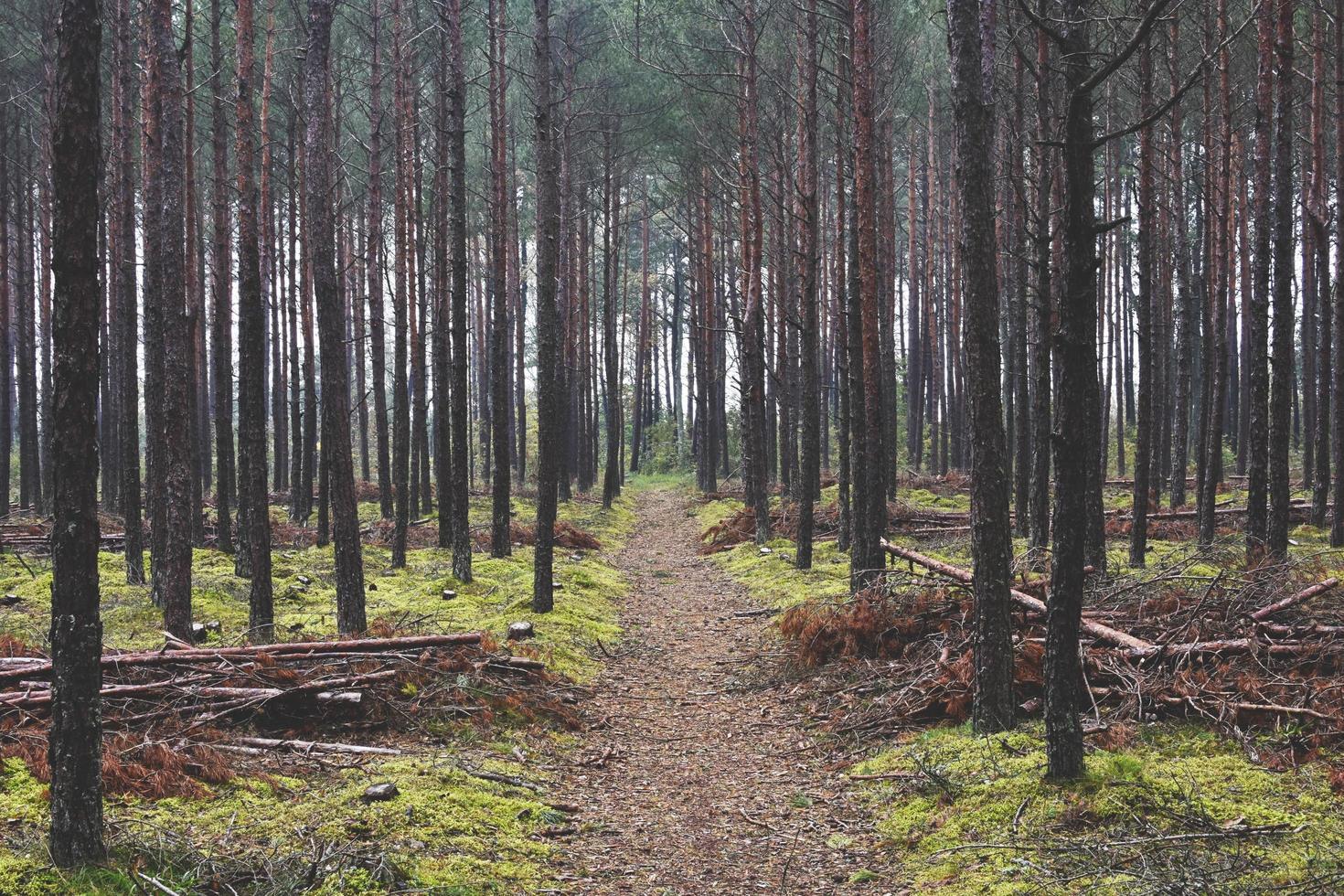 forêt d'automne boisée photo