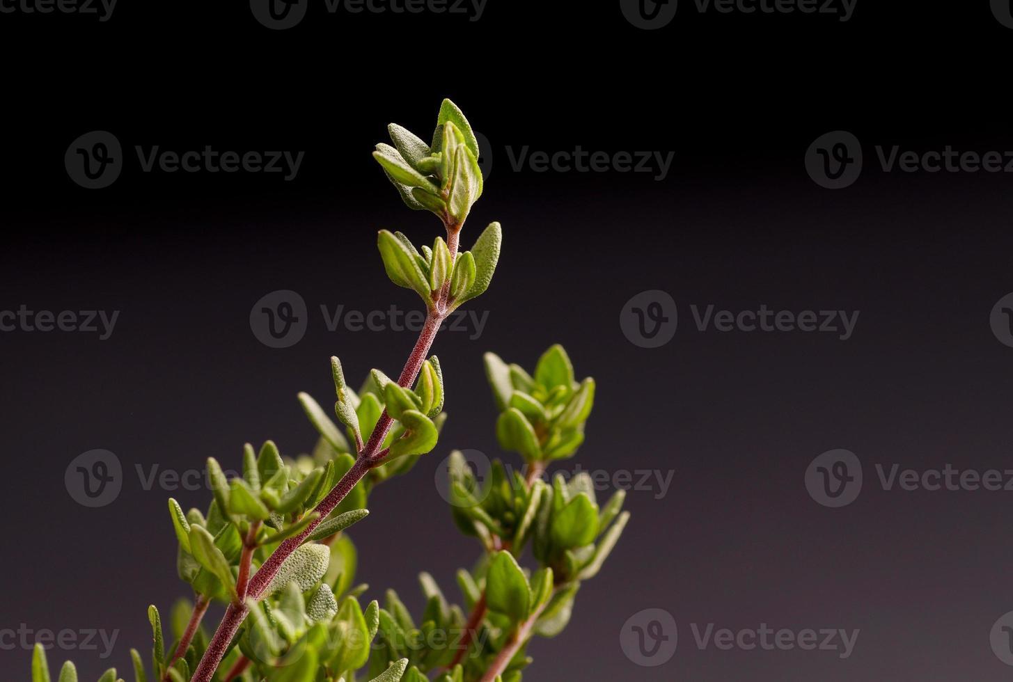 bouquet de thym photo