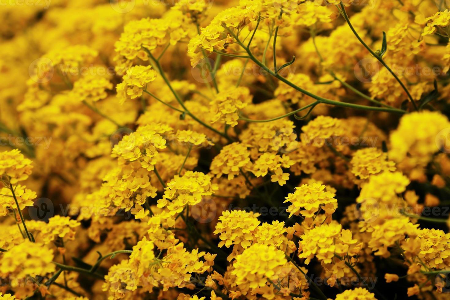 fleurs dans le jardin, printemps photo