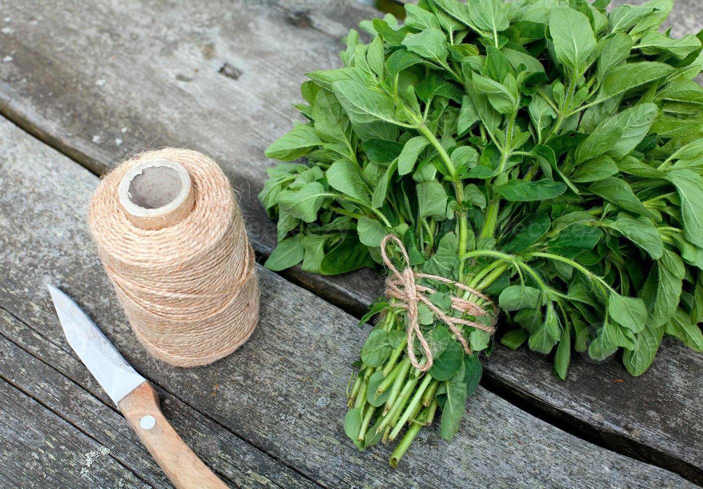 Origan lié préparé pour le séchage sur table en bois photo