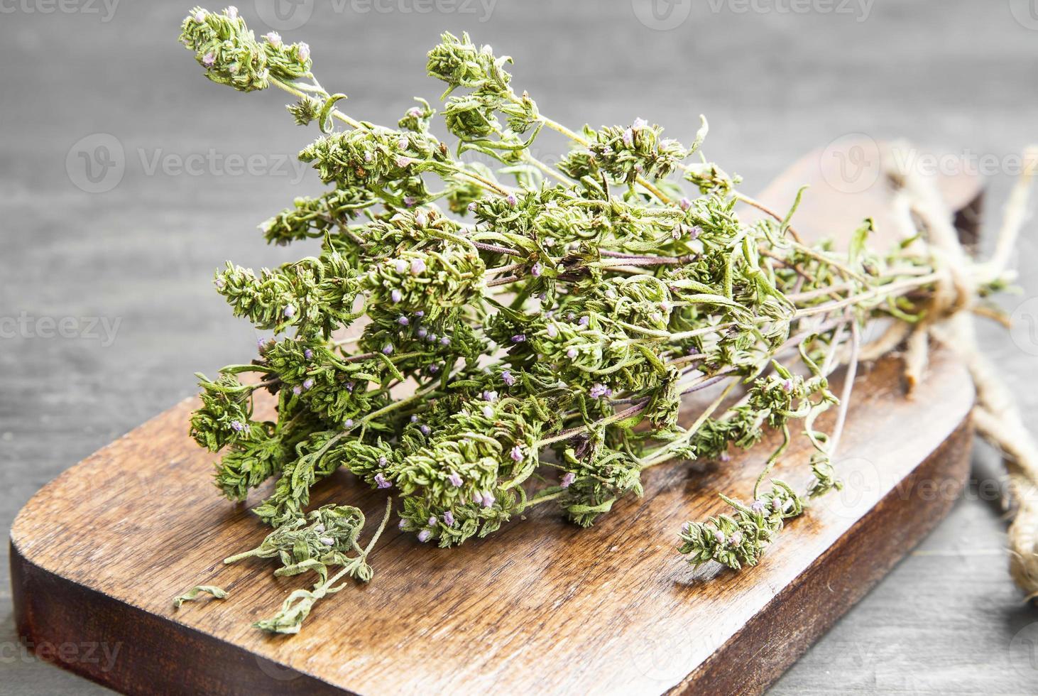 herbe culinaire de thym photo