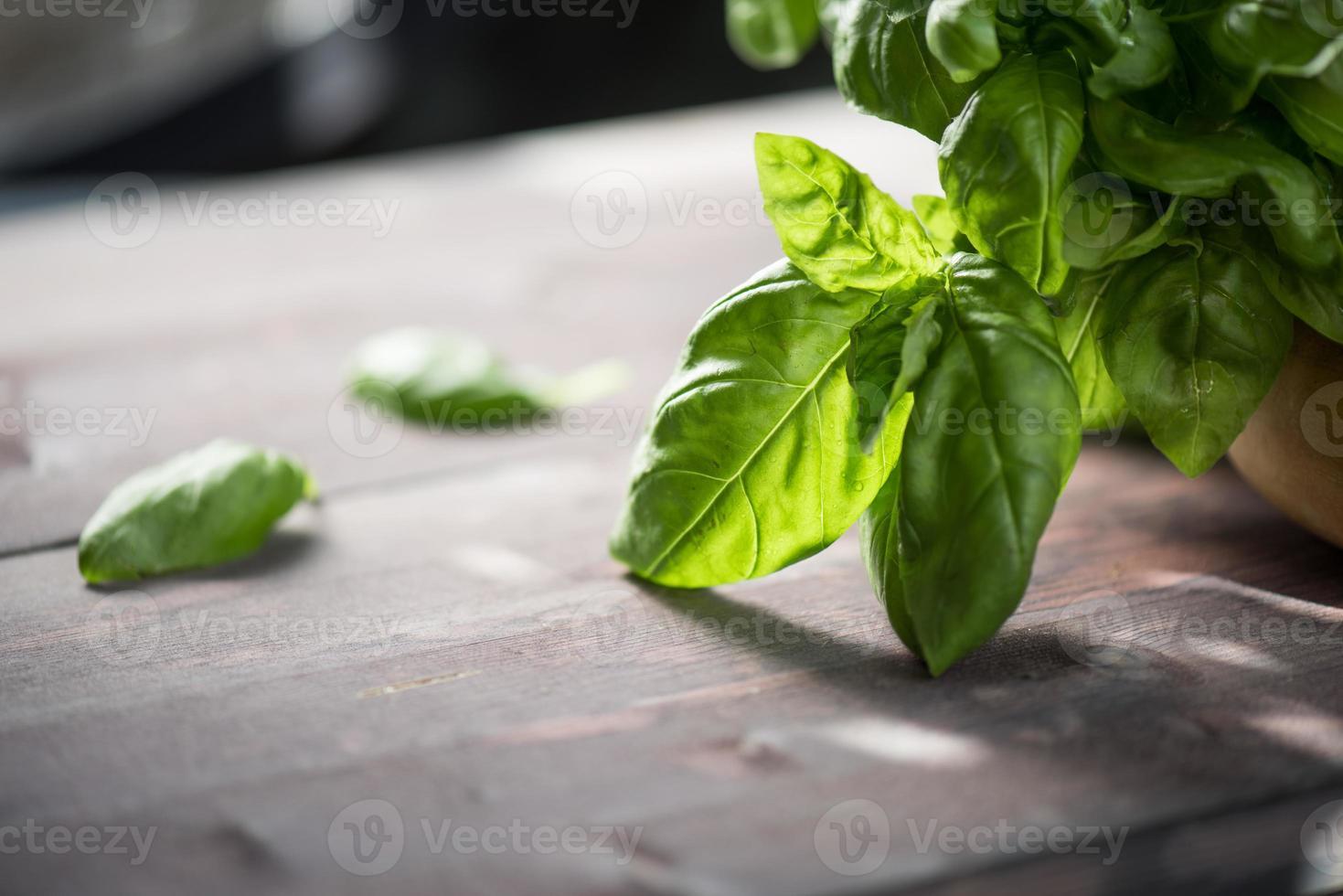 basilic frais bio photo