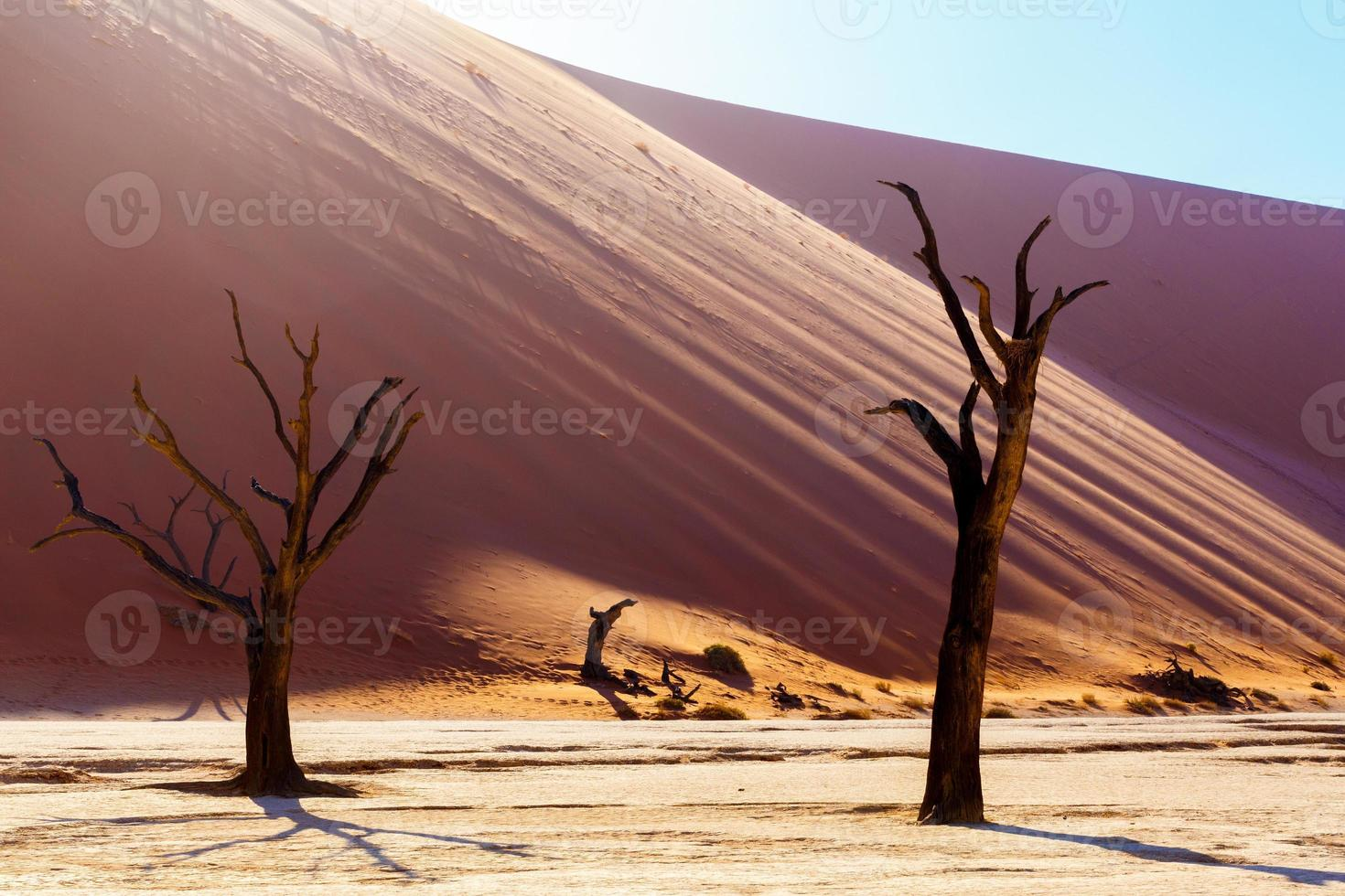 Beau paysage de vlei caché dans le désert du namib photo