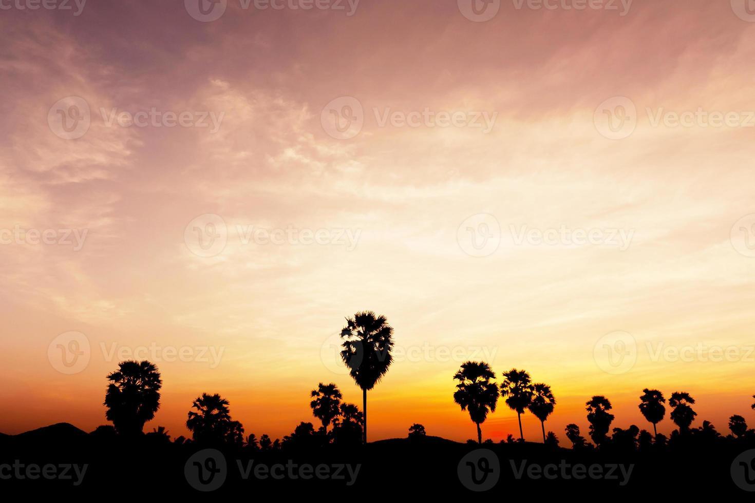 plam tree au crépuscule photo
