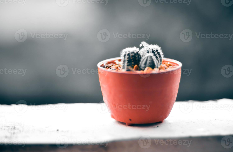 cactus sur la terrasse avec flou fond de jour de pluie photo