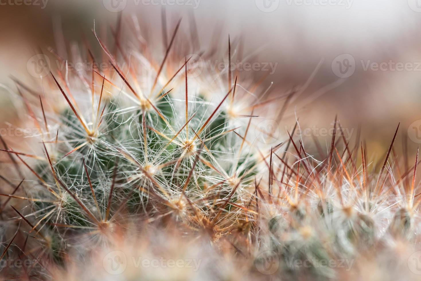 fond d'aiguilles de cactus photo