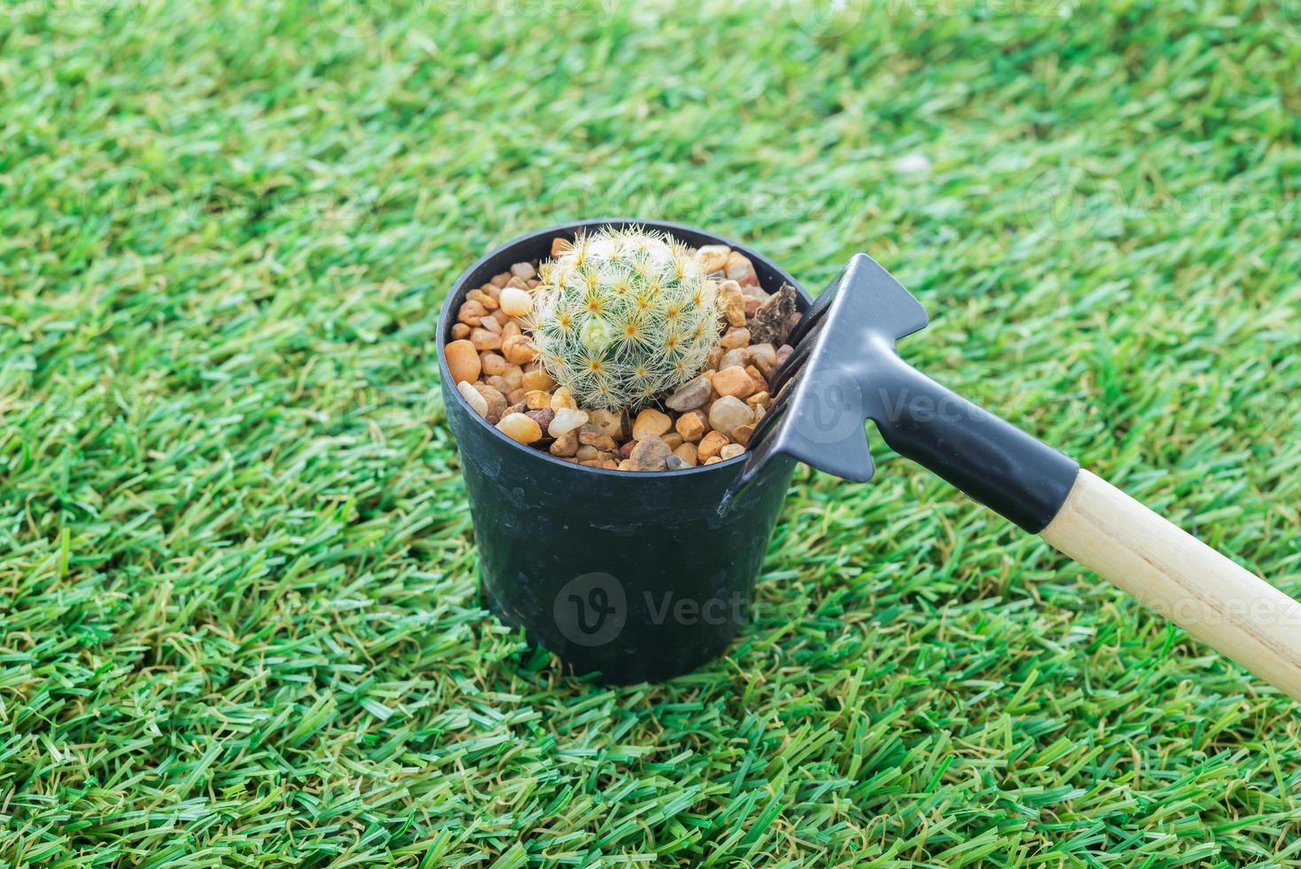 outils de jardinage à main cactus et râteau photo