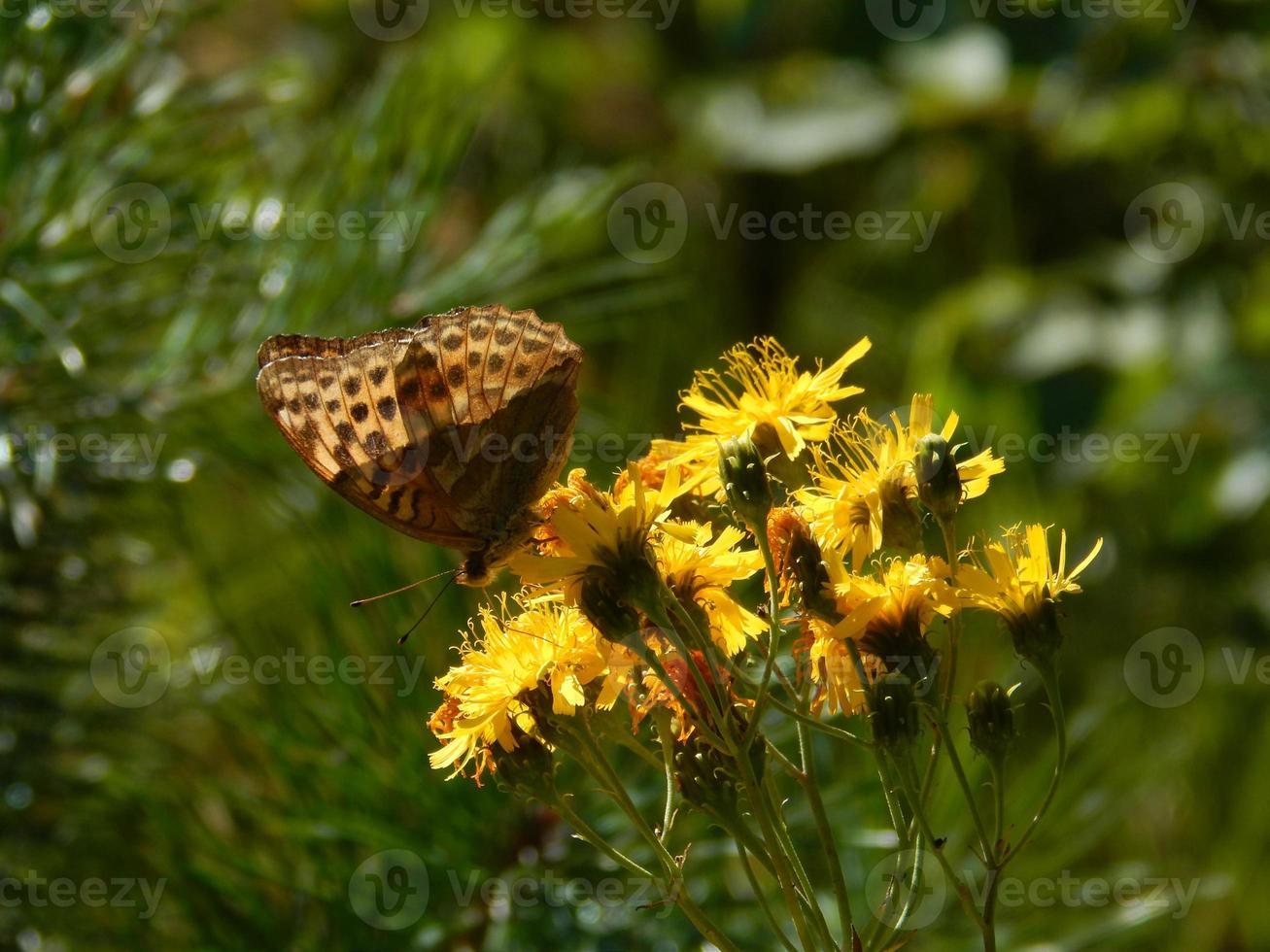 fleurs de la forêt de papillons photo