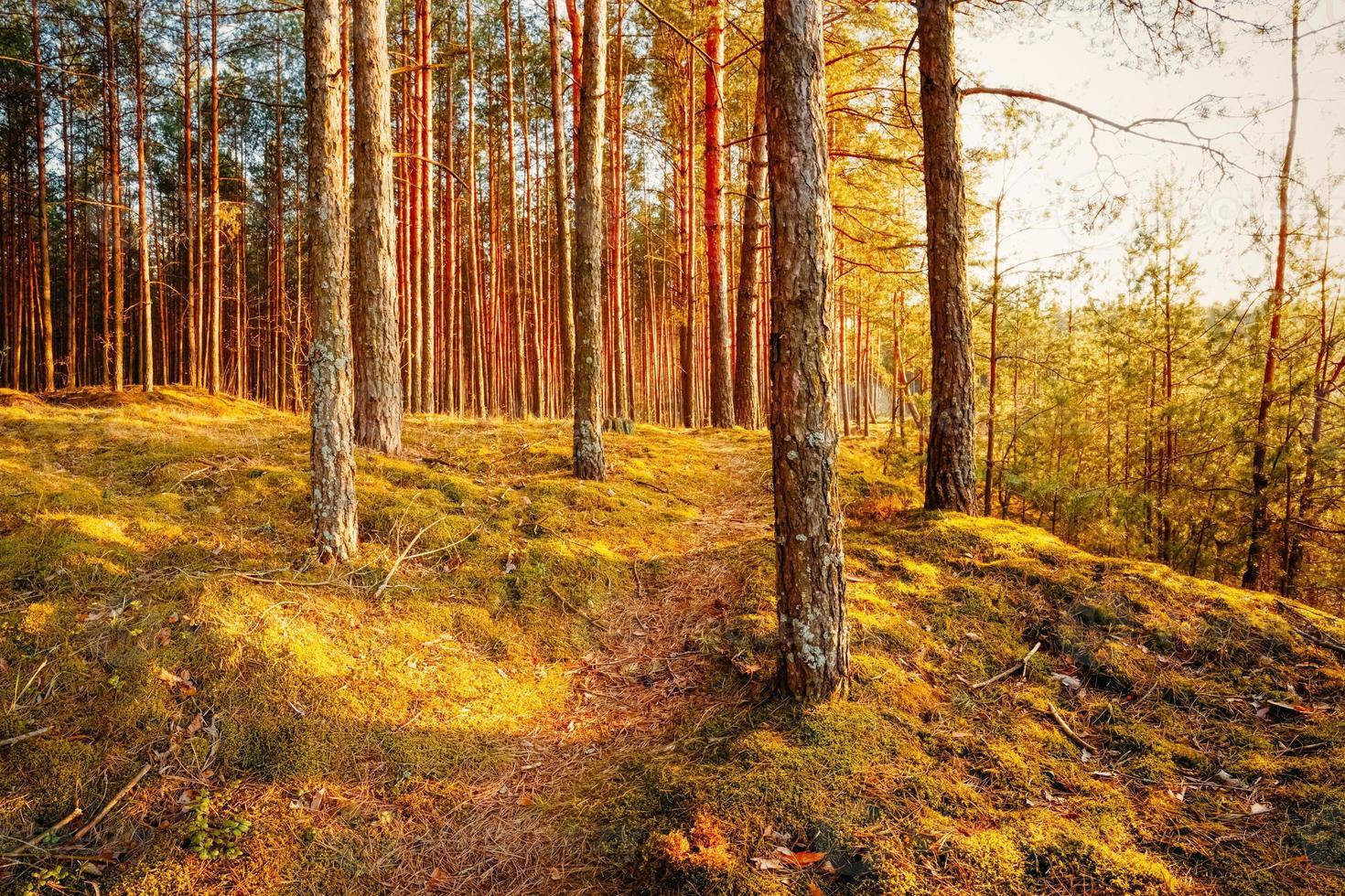coucher de soleil dans la forêt d'automne photo