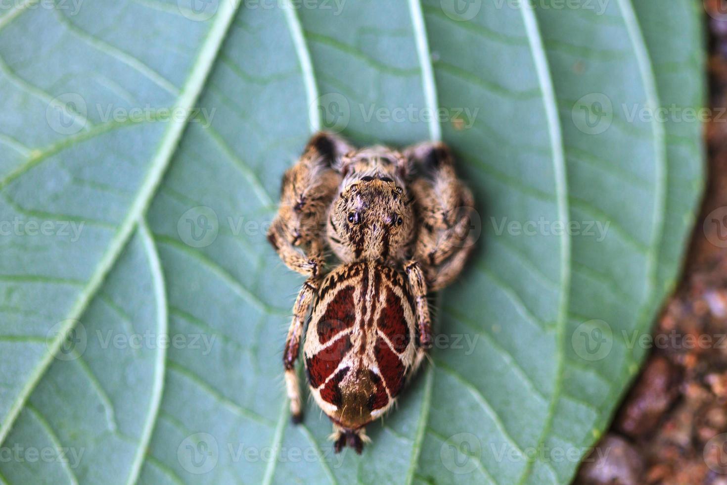 araignée en forêt photo