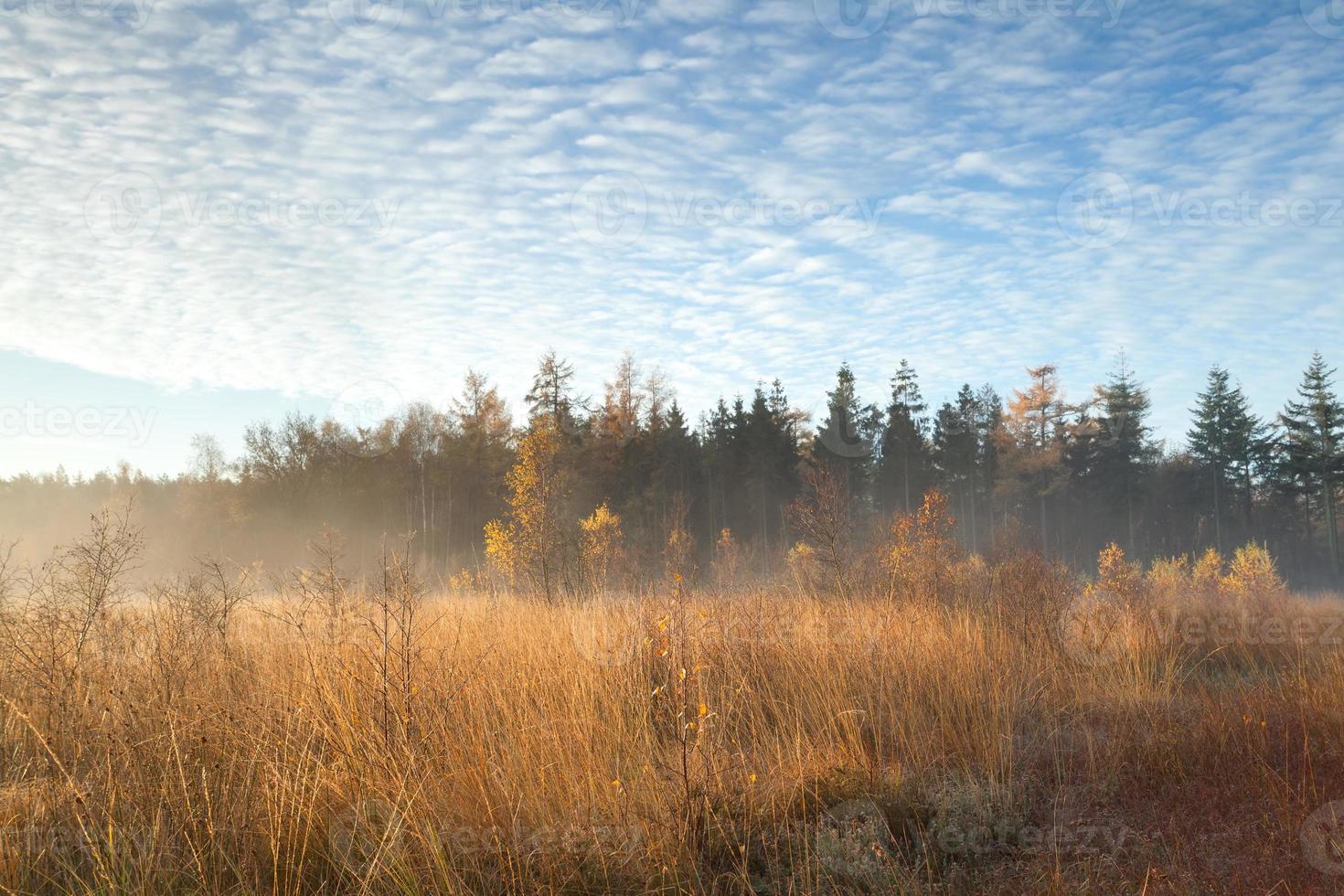 lever de soleil brumeux dans la forêt d'automne photo