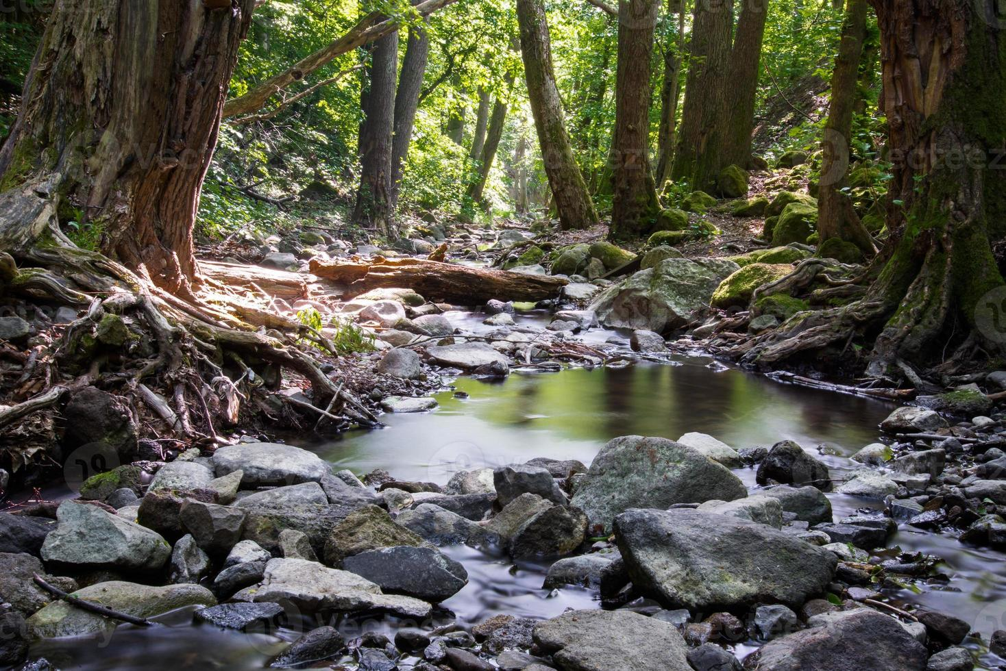 forêt en été photo